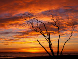 Dead Tree on Lighthouse Beach at Sunrise, Sanibel Island, Florida, USA Fotografie-Druck von Jerry & Marcy Monkman