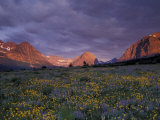 Sunrise with Wildflowers, Glacier National Park, Montana, USA Photographic Print by Darrell Gulin