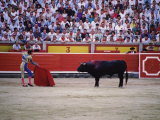Matador Waving a Red Cape in Front of a Bull Photographic Print