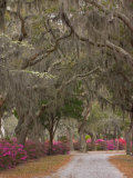 Bonaventure Cemetery with Moss Draped Oak, Dogwoods and Azaleas, Savannah, Georgia, USA Photographic Print by Joanne Wells