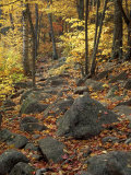 Fall Foliage on the Tarn Trail of Dorr Mountain, Maine, USA Fotografie-Druck von Jerry & Marcy Monkman