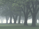 Trees in Fog, Louisville, Kentucky, USA Photographic Print by Adam Jones