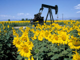 Sunflowers, Oil Derrick, Colorado, USA Photographic Print by Terry Eggers