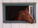Thoroughbred Race Horse in Horse Barn, Kentucky Horse Park, Lexington, Kentucky, USA Fotografisk tryk af Adam Jones