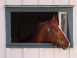 Thoroughbred Race Horse in Horse Barn, Kentucky Horse Park, Lexington, Kentucky, USA Stampa fotografica di Adam Jones