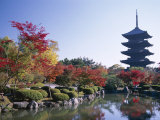 Autumn Leaves and Five-Story Pagoda, Toji Temple (Kyo-O-Gokoku-Ji), Kyoto, Honshu, Japan Photographic Print