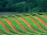 Trellised Vineyard in the Alexander Valley, Mendocino County, California, USA Photographic Print by John Alves