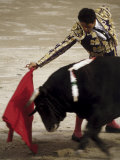 Spanish Bullfighter Camargue France Lámina fotográfica