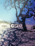 Bicycle Parked Against a Tree Photographic Print