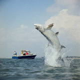 Tarpon Fishing, Miami, Florida Photographic Print