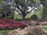 Orton Plantation Gardens, North Carolina, USA Photographic Print