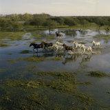 Herding Horses, Argentina Lámina fotográfica