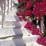 Bougainvilleas Photographic Print