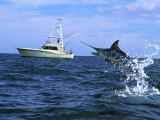 Marlin with Fishing Boat in Background Photographie