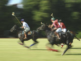 Polo Photographic Print