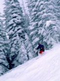 Skier with Snow Covered Trees Photographic Print