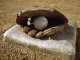 Baseball in a Baseball Glove on a Base Fotografie-Druck