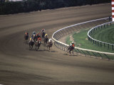 Nine Race Horses Photographic Print