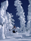Skier with Snow-covered Trees Photographic Print