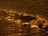 Golden Surf Scene Photographic Print