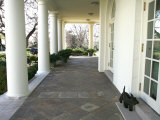 President Bush's Scottish Terrier Miss Beazley Plays on the Colonnade Photographic Print