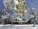 Snow Clings to Branches of a Berry Tree on the South Lawn of Thomas Jefferson&#39;s Home Photographie