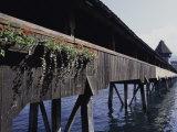 Chapel Bridge, Lucerne, Switzerland Photographic Print