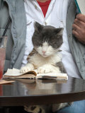 A Cat Joins its Owner Reading a Book at a Tokyo Cafe Photographie