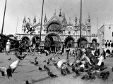 People Feed Pigeons at Saint Marks Square Photographic Print