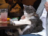 A Cat Joins its Owner Reading a Book at a Tokyo Cafe Photographic Print
