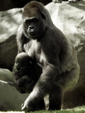 Mother Gorilla Julia Photographic Print