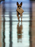 Midge Runs Down the Hallway of the Department after Fetching a Bag of Marijuana Photographic Print