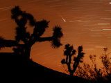 Several Leonids Meteors are Seen Streaking Through the Sky Over Joshua Tree National Park, Calif. Photographic Print