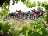 Riders are Seen Through Vineyards as the Pack Pedals Outside Beziers Photographic Print
