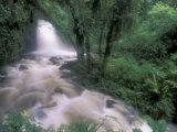 Cascade and Cloud Rainforest, Machu Picchu, Peru Reproduction photographique par Andres Morya