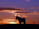 A Wild Horse Lingers at the Edge of the Badlands Photographic Print
