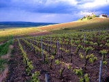 A View of the Champagne Vineyards Photographic Print