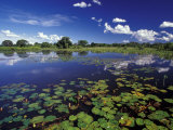 Waterways in Pantanal, Brazil Photographic Print by Darrell Gulin