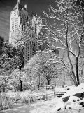 Snow-Covered Trees Photographic Print