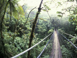 Sky Walk, Monteverde Cloud Forest, Costa Rica Fotografisk tryk af Michele Westmorland
