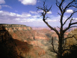 A Tree Frames a Spectacular View of Arizona's Grand Canyon Photographic Print