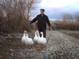 An Iraqi Villager Herds His Ducks Photographic Print