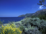 Broom Flowers and the Mediterranean Sea, Sicily, Italy Photographic Print by Michele Molinari