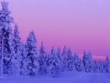 Sunset in the Lappish Winter, Finland Photographic Print by Daisy Gilardini