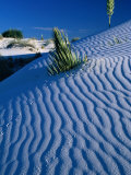 Rippled White Sand Dune with Plants Pushing Through, White Sands National Monument, USA Fotografie-Druck von Carol Polich