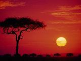 Wildebeest Migration, Masai Mara, Kenya Lámina fotográfica por Dee Ann Pederson