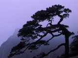Seeing Off Pine Tree on Mt. Huangshan (Yellow Mountain), China Photographic Print by Keren Su