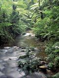 Rainforest Tree Fern and Stream, Uganda Fotografisk tryk af Gavriel Jecan