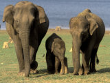 Asian Elephant Family, Nagarhole National Park, India Fotoprint van Gavriel Jecan