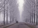 Wagon on Misty and Icy Road, Suceava County, Romania Photographic Print by Gavriel Jecan